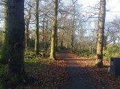 Woodland Walk Dec 2019